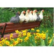 Gezellig kippen zittende op een bank