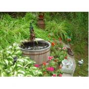 Oude waterpomp als vijver met een kikker